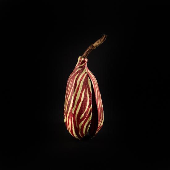 Bombax Malabaricum (Silk Cotton Tree) India and Malayan Peninsula
